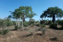 DSC_0093-N.P.-Quiçama