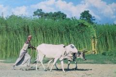 IMG_3382-Boer-in-Bangladesh