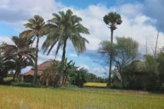 IMG_3384-Platteland-Bangladesh