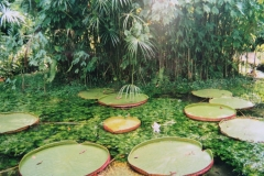 IMG_3256-Belem-Jardim-Botanico-Tropical