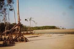 IMG_3260-Ilhz-Marajo-in-monding-Amazone