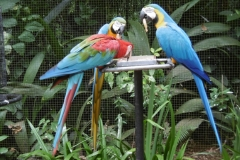 P1000354-Parque-das-Aves
