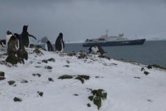 P1000844-Plancius-op-Barrientos-Aitcho-South-Shetlands