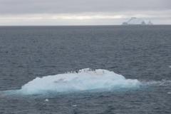 P1000989-Pinguins-op-ijsschots