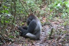 IMG_0463-Bayanga-gorillabezoek