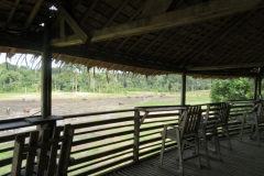 IMG_0570-Platform-bezoek-bosolifanten-Bayanga