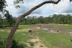IMG_0582-Bayanga-saline-bosolifanten