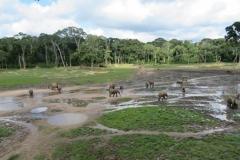 IMG_0615-Bayanga-saline-bosolifanten