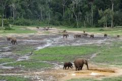 IMG_0648-Bayanga-saline-bosolifanten