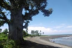 P1000959-Baobab-bij-strand-in-Bambao