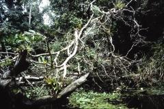 59-21-Tortuguero-gevallen-bomen-versperren-het-kanaal