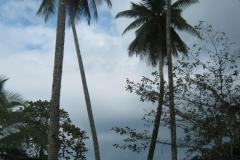 IMG_1147-Costa-Rica-Osa-Lapamar