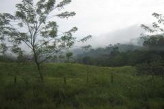 IMG_1163-Costa-Rica-Osa-schiereiland