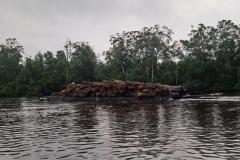 DSC_0344-Vervoer-van-boomstammen