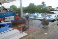 1_P1120566-Puerto-Ayora-haventje