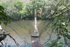 P1000596-Lianenbrug
