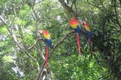 IMG_0574-Honduras-Copan-PN-de-Aves