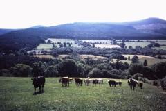 56-26-Glencree-Wicklow-landschap