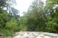P1060607-Alas-River-in-Gunung-Leuser-NP
