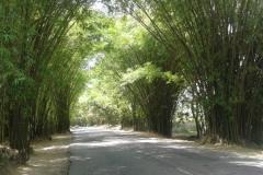 20170405_132654-Bamboo-Avenua