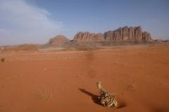 P1080489-Wadi-Rum-in-de-morgen