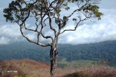 HPIM0215-Prachtig-zicht-tijdens-trekking-op-Mt.-Cameroon