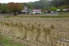 P1010005-Rice-is-the-staple