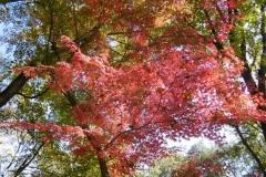P1010141-Autumn-in-Korea