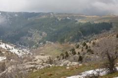P1080057-Tanourine-Cedar-Reserve