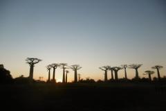 1_P1010263-Sunset-at-Baobab-Avenue