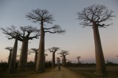 1_P1010271-Baobab-Avenue