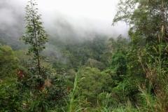 DSC_5451-Kota-Kinabalu-N.P.