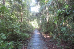 IMG_3181-Walking-through-the-jungle-on-planks