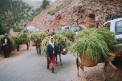 IMG_3705-Kasbah-Tahanaoute-op-weg-S-501-naar-Marakech