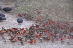 P1010257-Vogeltjes-in-Grande-Baie