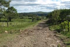 IMG_0799-Nicaragua-typische-weg-op-het-platteland