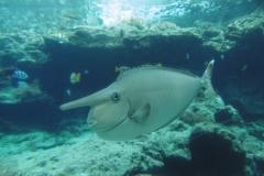 P1010364-Tropical-fish