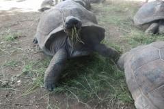 P1010335-Vers-voedsel-voor-de-schildpadden