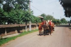 IMG_3523-Arbore-Moldova-koets-met-veulen