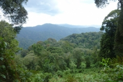 P1050517-Nyungwe-NP-wandeling