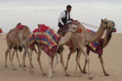 IMG_2050-Najran-kamelenkaravaan