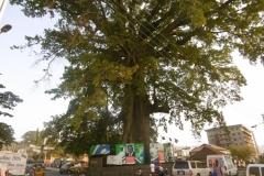 P1000827-Cotton-Tree-Freetown