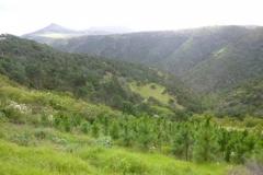 P1020057-Wild-inland-panorama