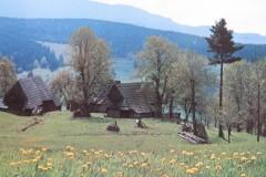 IMG_5247-Zazriva