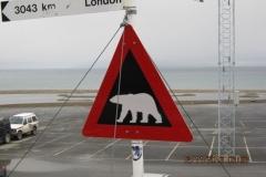 IMG_0603-Gevaarlijke-beren-op-gans-het-eiland