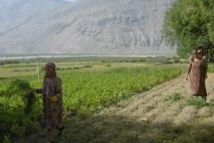 P1000840-Harvesting-in-Langar