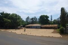 1_P1050894-Koffie-ligt-te-drogen-omgeving-Arusha