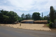 P1050894-Koffie-ligt-te-drogen-omgeving-Arusha