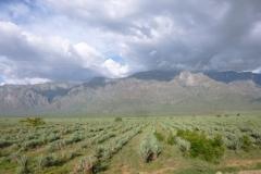 P1050902-uitgestrekte-sisalplantages-bij-Moshi