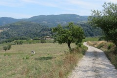 IMG_4274-Pieve-di-Panzano-Chianti